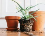 When to repot your plants?